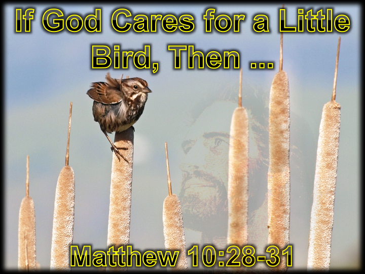 If God Cares for the Little Bird, Then...